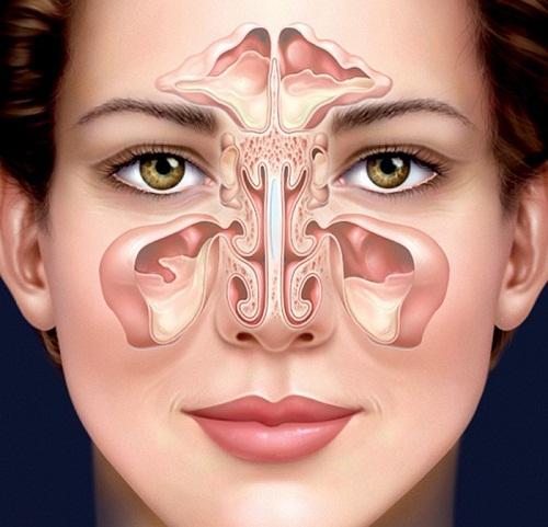 Hình ảnh minh hoạ của Cấu tạo mũi người